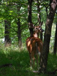 Saw a deer while hiking Saturday.